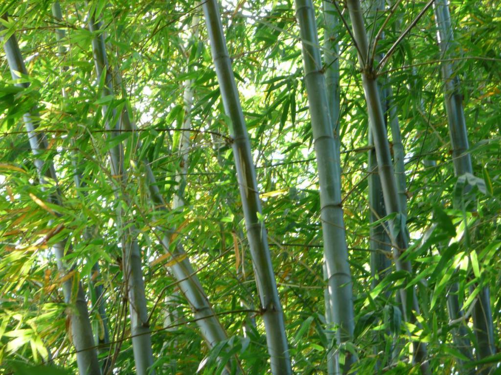 bambus im garten, rhizomsperre für bambus notwendig? - garten ratgeber, Design ideen