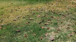Was tun damit gelber Rasen wieder grün wird?