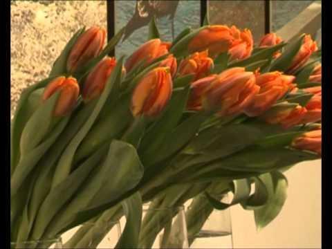 tulpenpflege die richtige pflege von tulpen. Black Bedroom Furniture Sets. Home Design Ideas